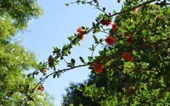 I speak for the trees: Climate change poses major threat