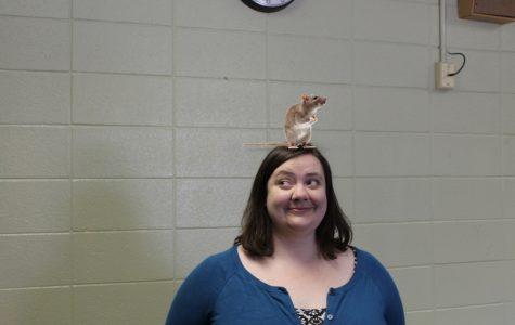 Rat-a-Teacher: A furry friend helps out a teacher