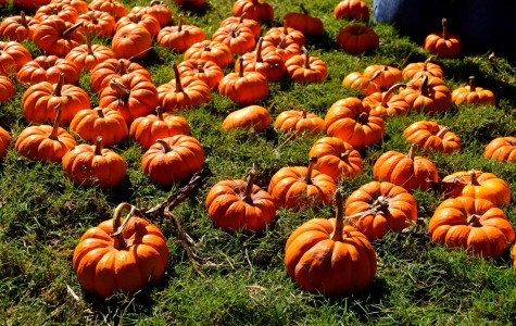 Legacy Park Pumpkin Fest draws in residents for 19th annual celebration