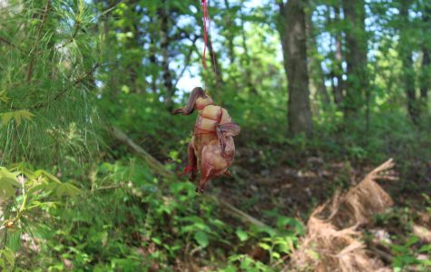 Ms. Aughey's Forensic Science classes are examining decomposition in a unique way, through chickens. Students were to hang or bury their raw chickens and check in every two days to see the natural changes occurring.