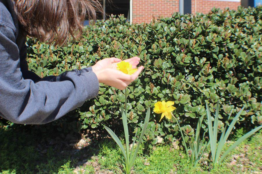 "As warm weather approaches and flowers begin to bloom throughout the courtyard, students at NC embrace the spring spirit. ""I really love when the flowers start blooming. There's a new pop of color,"" sophomore Kes McGuire said, ""It's a new start."""