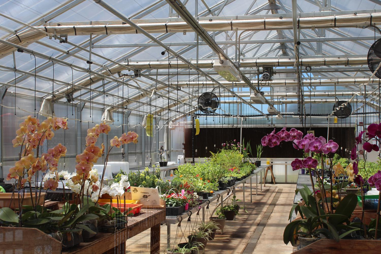NC's own Green House Gang plans to host a plant sale May 11-13.  The times include 3:30-5:00 pm on Thursday and Friday, and also Saturday from 9:00-1:00 pm. Orchids, flowers, veggies, and hanging baskets will be available for purchase. Come out and support your warriors!