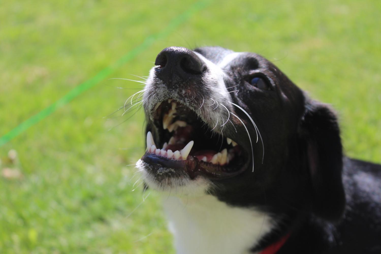 Adopt, don't shop: Dogs deserve better