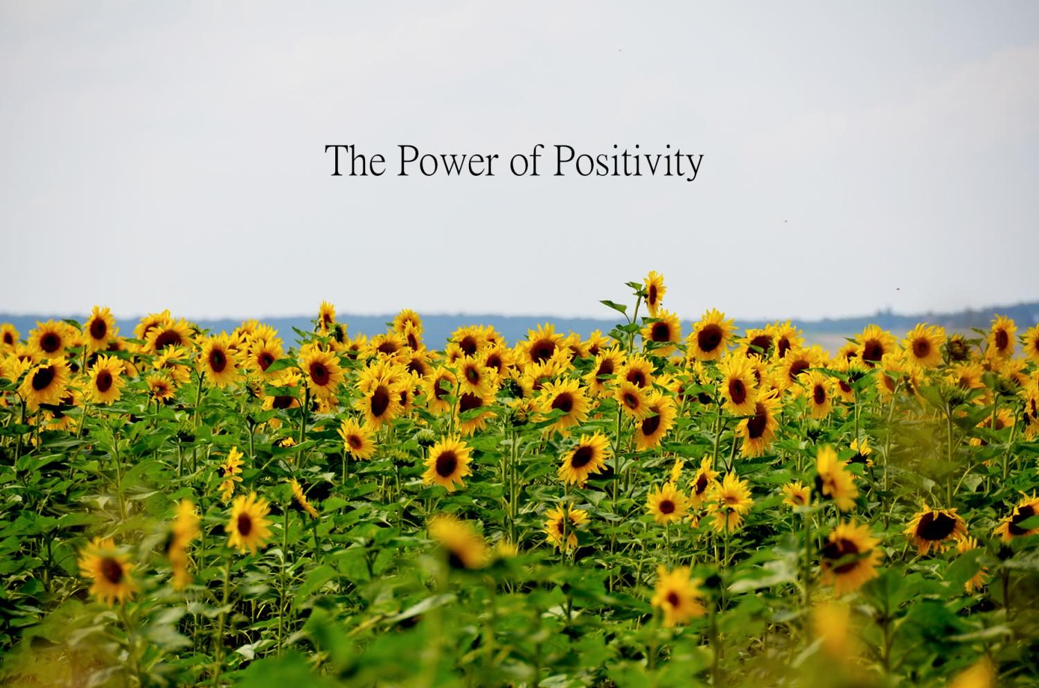 A field of sunflowers symbolizes happiness and positivity.