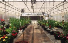 Succulents, orchids, vegetables, and more: It's time for the Annual Greenhouse Gang Plant Sale galore
