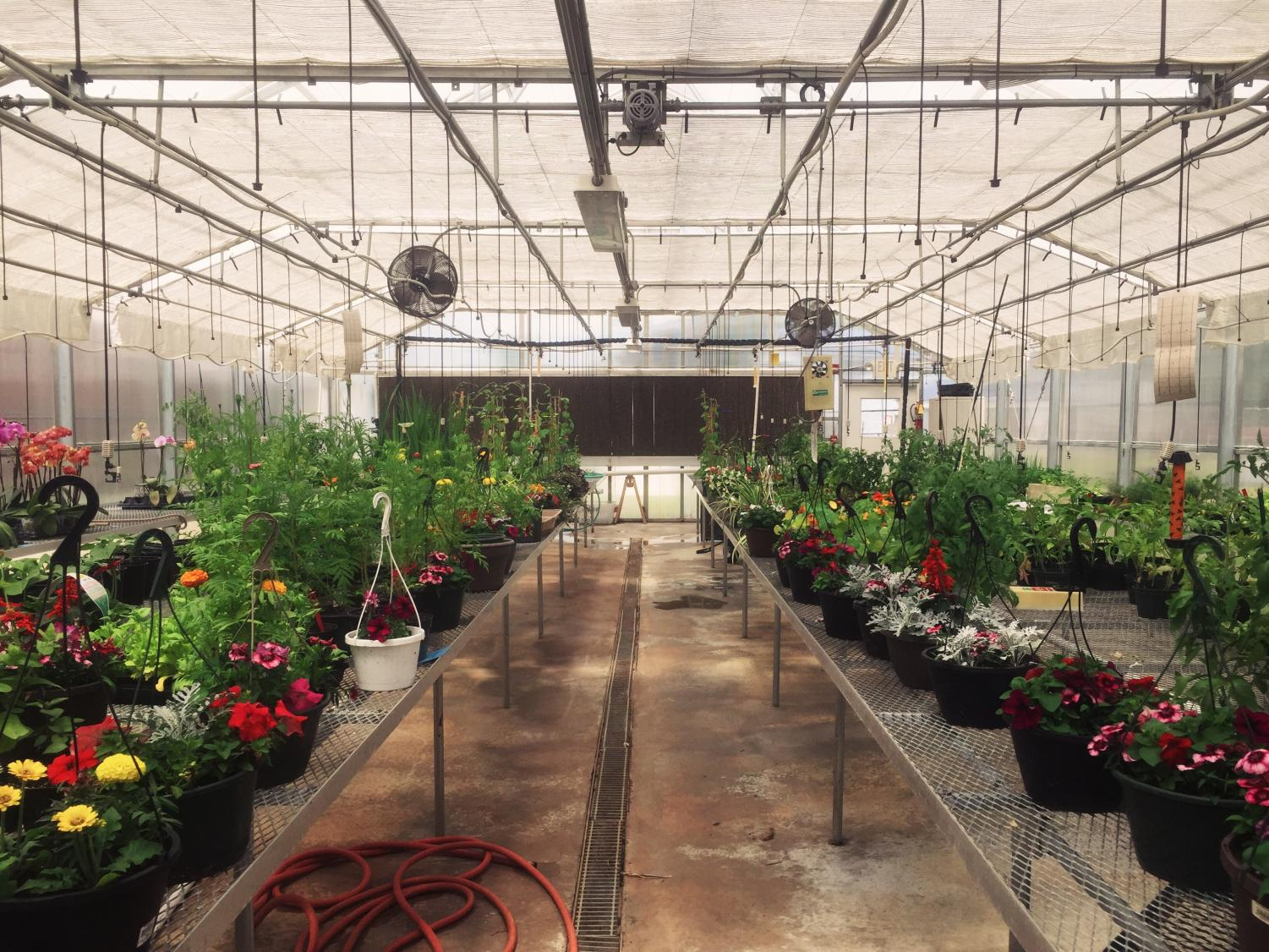 The Greenhouse Gang's annual plant sale for Mother's Day will take place from Thursday, May 10 through Saturday, May 12. All items stay within a student's price range and will make the perfect gift for mothers.