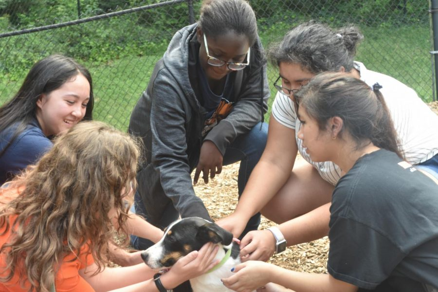 At the Lake City Animal Hospital, these students surround the shelter dog, Pickles, as they take turns petting him. Pickles steals the hearts of many as he jumps around giving kisses to his new friends. Interacting and socializing with the dogs at the shelter brings smiles and joy to both the dogs and the students.