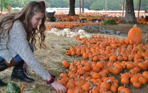 Falling in love with fall happenings