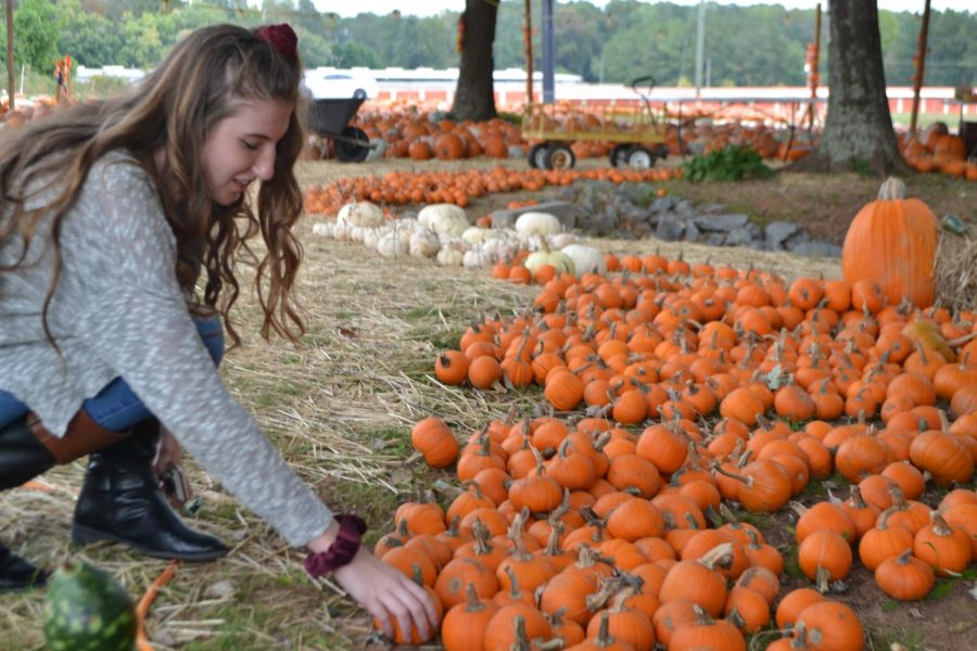 """Sophomore, Abbey Corley, indulges in a classic fall activity, picking out the perfect pumpkin to later carve and decorate. All sizes and shapes of pumpkins were found at this small pumpkin patch, on Cobb Parkway. """"From picture taking to looking at all the pumpkins, this is my favorite fall activity,"""" said Corley."""
