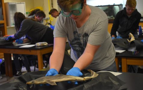 "Mr. Evans' Oceanography class dove into studying the shark's anatomy by dissecting one in class. Students cut and examined parts of the shark to further visualize what helps the shark function, instead of looking at a textbook. ""The dissection helped me because we are learning about the shark, but pictures and diagrams do not really help. Seeing the real thing helps you get an inside of the topic,"" junior Priscilla Peterson."