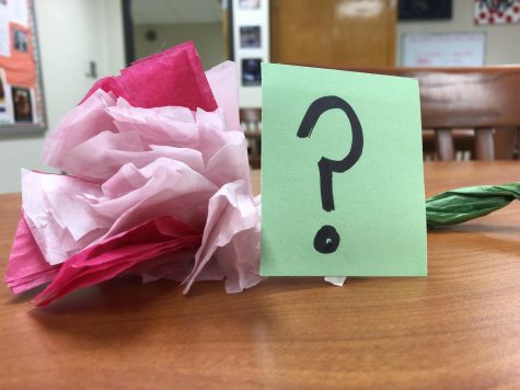 Cheerleaders capture hearts with carnations