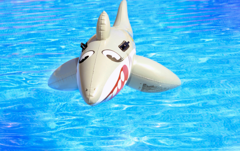 To be or not to be eaten: Sharks join the swim team