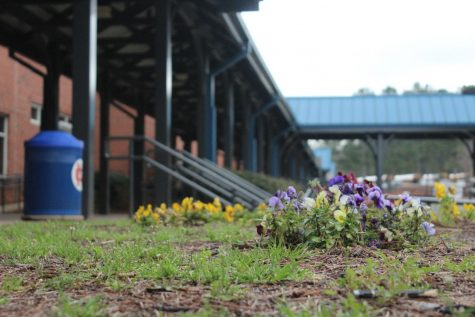 The first flowers of spring bloom in the courtyard as students enjoy a half day on March 11. Several students look forward to enjoying the newly warm weather during their afternoon off.