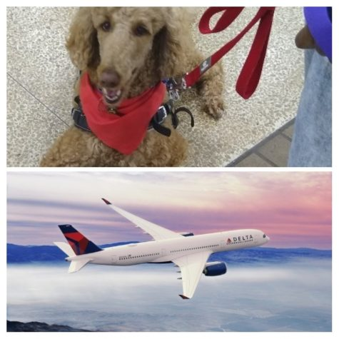 Service dog and Delta Flight. Delta banned Emotional Support Animals from flights starting January 11, following the lead of fellow airlines. Delta's decision caused varying reactions on all sides of the issue.