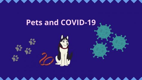 Recently numerous species of animals tested positive with the COVID-19 virus and multiple came back positive. Doctors and physicians shared advice that can help decrease the spread through animals and help if your pet attracts the virus. They also stated how the virus can get spread to certain animals and why those animals specifically.
